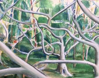 Martha's Vineyard Stunted Beech Trees