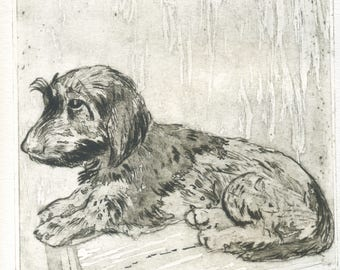 "Original engraving ""Brando\Dog\Wirehaired dachshund\dog print\Chien gravure\dachshund\dog water-forte\art print\printmaking etching\Gravure"
