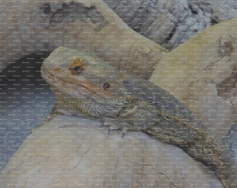 "Set of 10 4"" x 5.5"" Greeting Cards using original image of a Reptile"
