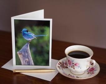 Splendid Fairy Wren - Any Occasion Card (5x7)