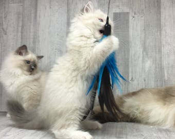 Our Bestseller Cat toy | XL feather crown - blue | Long cat toy | Feather cat toy | Interactive cat toy |