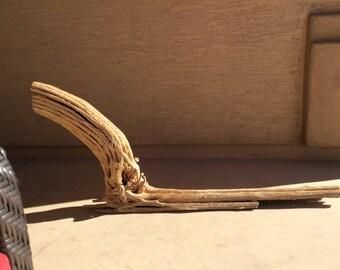 Sandblasted Piece of Saguaro Cactus With a Big Arm, Very straight