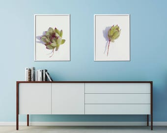 Set of 2 Succulent Prints, Modern Succulent Wall Decor, Modern Flower Art Prints, Kitchen Printable Wall Decor, Bedroom Printable Wall Decor
