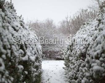 Digital Backdrop w/Snow, Digital Download, Digital Winter Backdrop, Digital Prop, Snow Scene, Christmas Backdrop, Composite Photography