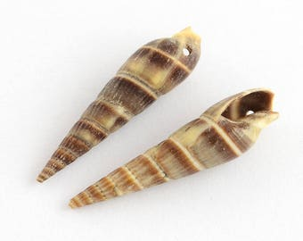 Set of 5 shells spirals with hole 34x8x8.5 mm, hole: 1.5 mm