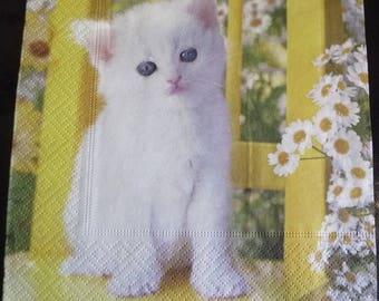 White kitten 2 paper towel