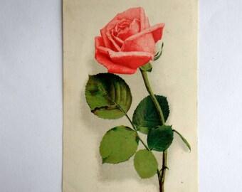 Vintage postcard  1950s Roses Tallin postcard Old postcard Floral postcard Roses illustration Greeting card Postcard roses