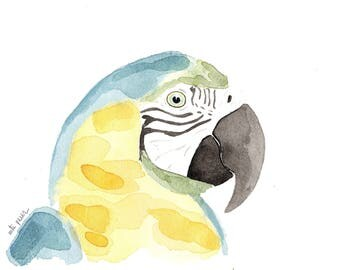 Parrot yellow and blue. Original watercolor