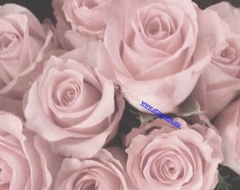 pink roses  photography, 5 postcards, pastel pink rose art, postcard art, fine art, wallpaper, ballet, table art