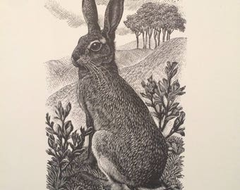Vintage Reproduction Print of Brown Hare by CF Tunnicliffe, 1949