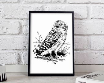 Owl Bird poster, Owl Bird wall art, Owl Bird wall decor, Owl Bird print