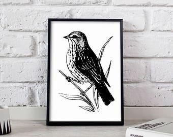 Sparrow Bird poster, Sparrow Bird wall art, Sparrow Bird wall decor, Sparrow Bird print
