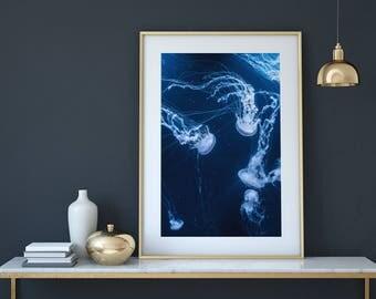 Jellyfish, Monochrome, Wall Art, Living room decor, Photography, Scandinavian design , Nordic