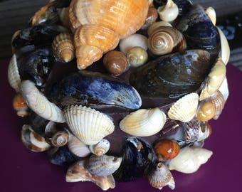 seashell trinket/ jewellery box, mermaid treasure box,
