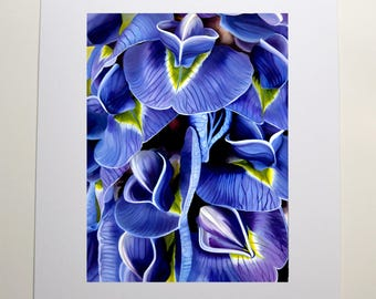Purple Blue Wisteria Flower Prints