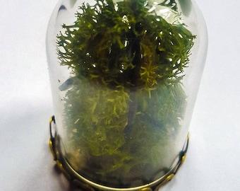 Terrarium Bell Jar