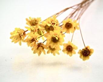 X 1 pretty mini Daisy yellow 0.8 cm
