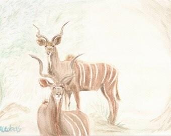 Kudu (antelope)