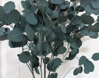 Eucalyptus leaf /  green dried eucalyptus leaf / dried leaf / high quality / wedding bouquet