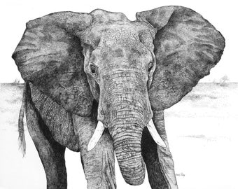 Elephant Rules/Pen and Ink Drawin/Fine Art Print/Wildlife Art