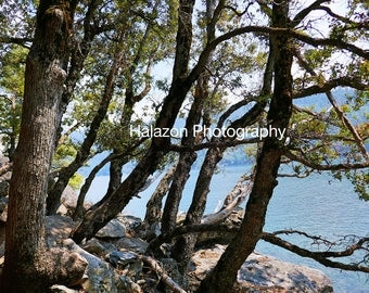 Tree Photograph, Wall art