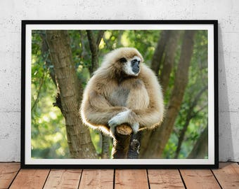 Gibbon Monkey Photo // Thailand Wildlife Photography Print, Nature Wall Art, Lar Gibbon Home Decor, Asian Animal Photo, White-Handed Gibbon