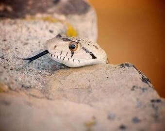 Snake at Grand Canyon Fine Art Photography Print