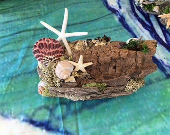 Driftwood wall hanging with shells and moss