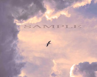 Fine art photography, cloud scape, wildlife, Pelican flight.