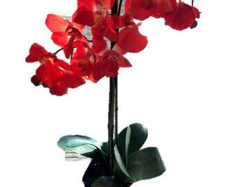 Red Orchids in Black ceramic vase