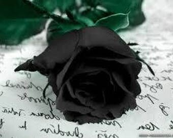 100Pcs Mysterious Black Rose Flower Plant Seeds Beautiful Black Rose New Hot