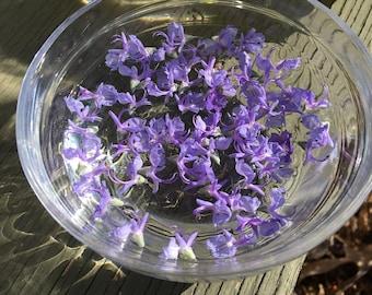 Rosemary Flower Essence / New Moon Beginnings / Solar Eclipse / Vibrational Healing / Vibrational Medicine Remedy / Pisces Gifts