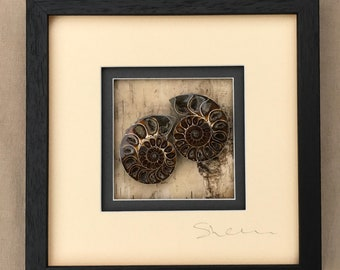Framed Madagascan Ammonite Picture