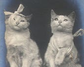 1900s postcard, Injured CATs. RPPC real photo postcard.  Cats after fight.