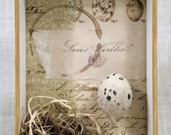 Nature Assemblage * OOAK art * nest * egg * bird * nature * warbler