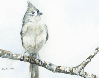 Titmouse in Spring -  4 x 6 inches Original Watercolor