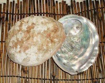 2 Large vintage 7 inch ABALONE SHELLS • blue iridescent • pink seashell