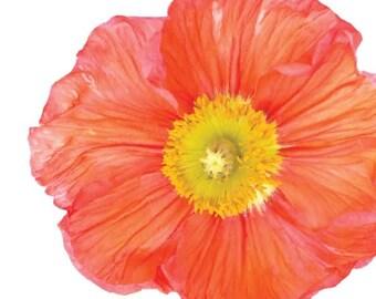 Orange Poppy Garden Flower - Vinyl Decal Wall Décor