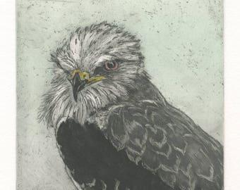 White-Tailed Kite, Original Fine Art Etching