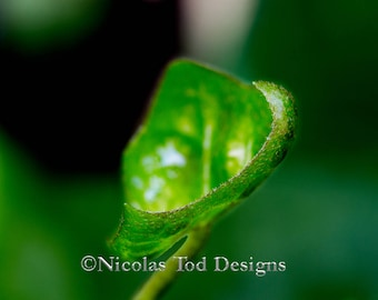 Green leaf - macro - nature photo