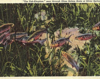 Silver Springs, Florida, Fish-Kingdom, Glass Bottom Boats - Vintage Postcard - Postcard - Unused (ZZ)