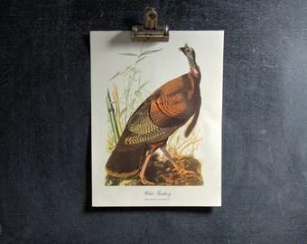 Vintage Audubon Birds, Wild Turkey, Art Print, Birds Print, Best Loved Bird Paintings by Audubon, FREE SHIPPING