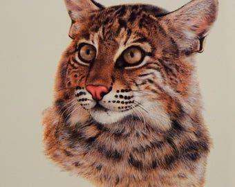 Vintage Charles Frace Bobcat Print Signed 1982 Collector Print