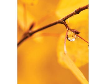 Nature Photography 'Golden Drop' by Meirav Levy - Autumn Leaves Art Contemporary Trees Decor on Metal or Plexiglass