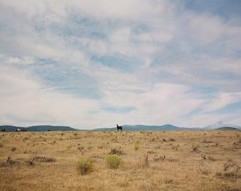 8 x 10 // Film Art Print // film Photograph // Curious horse