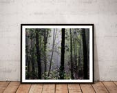 forest photography / mist...
