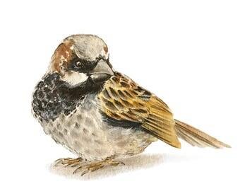 Watercolor Print House Sparrow Bird Song Bird painting chickadee art