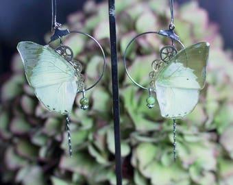Boucles d'oreille Imago véritables ailes de papillon Green Charaxe