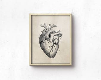 Anatomy Art PRINTABLE - Heart - Vintage Science Art Print - Office Decor - Digital Download - Brown And Black - Medical Student - SKU:3001
