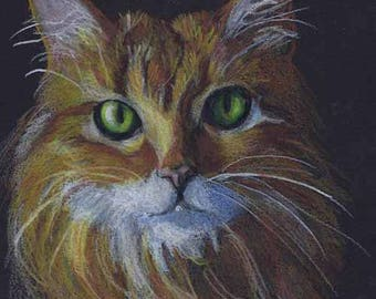 Orange Cat Art Print of Colored Pencil Drawing on Black paper by artist Robin Zebley, Tabby cat, fine art, Orange and white, Orange stripes